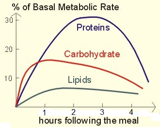 Weight Destroyer Program Basal Metabolic Rate Chart